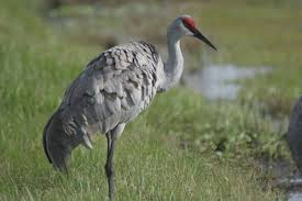 Bird In Backyard by Devices To Stop Cranes In Backyard Ponds Hunker