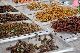 insecte cuisine insecte frit par nourriture exotique image stock image du cuisine