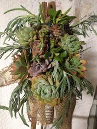 Hanging Succulent Planter by 3523 Best Garden Suculents U0026 Cactus Images On Pinterest Plants