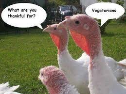 16 pre thanksgiving funnies gallery ebaum s world