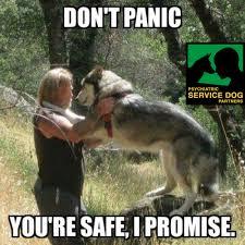 T Dog Memes - service dog memes psychiatric service dog partners