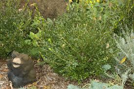 landscape plants by deer resistance home lawn ga