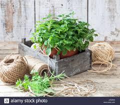 Urban Vegetable Garden by Oregano Garden Pot Stock Photos U0026 Oregano Garden Pot Stock Images