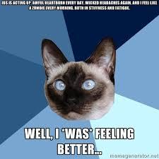 Heartburn Meme - friday 15 may 2015 meme images chronic illness cat