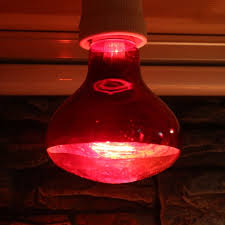 red heat lamp bulb pet infrared basking 40w 60w 100w spotlight