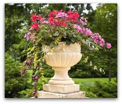 Flowering Patio Plants Successful Container Gardening Starts With Watering And Feeding