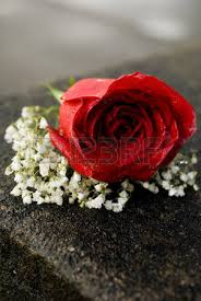 Red Rose Corsage Red Rose Corsage Stock Photos U0026 Pictures Royalty Free Red Rose