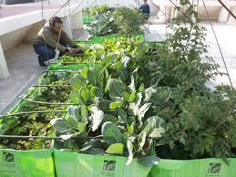 rooftop organic farming rooftop farming rooftop organic farming