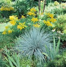 best ornamental grasses for midwest gardens grasses plants