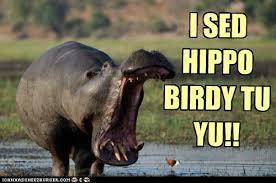 Hippo Memes - i sed hippo birdy tu yu animal attraction pinterest