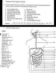anatomy of gi system images learn human anatomy image
