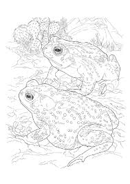 tree frog coloring pages coloringstar