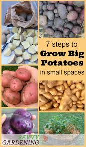 Potato Planter Box by Grow Potatoes In Small Spaces With These 7 Easy Steps