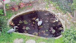 Catfish Backyard Pond by Beware Of Pond Predators They Want Your Fish