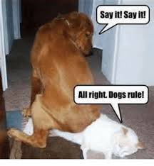 Dogs Memes - say it say it allright dogs rule dogs meme on me me