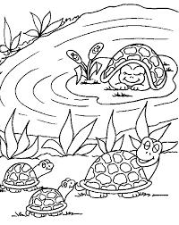 turtle u0026 babies familycorner