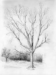 tree drawings in pencil bing images trees sketch pinterest