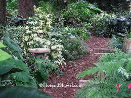 Florida Garden Ideas 140 Best Florida Gardening Images On Pinterest Gardening