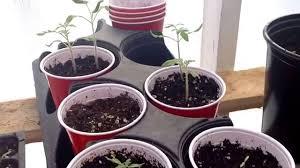 update growing vegetables in winter in canada ontario youtube