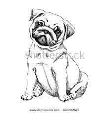 pug dog sketch stock vector 690562678 shutterstock