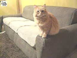 gatti divani divano tessuto antigatto idee per il design della casa