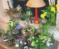 indoor plant display orchid terrarium ideas beautiful luxury doors indoor plant display