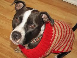 christmas sweater pittieful love