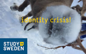 nordic animal cheat sheet study in sweden the student blog