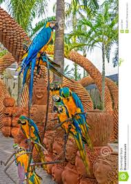 Nong Nooch Tropical Botanical Garden by Blue And Yellow Macaw Arara Parrots In Nong Nooch Tropical