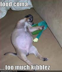 Food Coma Meme - funnygirlweightloss smile you re at the best wordpress com site