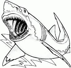 free printable shark coloring pages coloring home