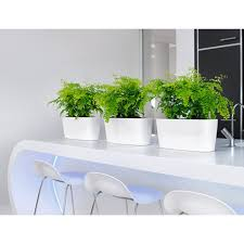 indoor windowsill planter lechuza windowsill planters newpro containers