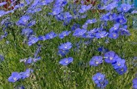 Low Maintenance Plants And Flowers - which tree requires low maintenance and can be 2017 quora