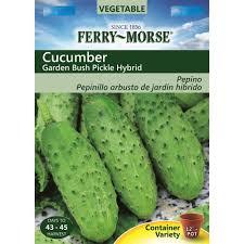 ferry morse cucumber garden bush pickle hybrid seed 9513 the