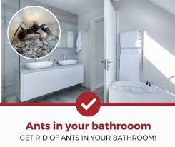how to clean cupboards after pest how to get rid of ants in your bathroom 2021 review pest