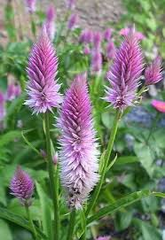 Flowering Patio Plants 76 Best Plants Non Toxic To Dogs Images On Pinterest Patio