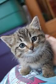 baby kitty findingmyself57 deviantart