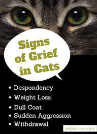 grieving loss of pet yes cats do grieve when another cat dies