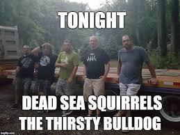 Dead Squirrel Meme - dead sea squirrels media pa home facebook