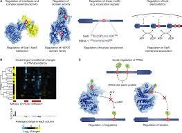 evolution and functional cross u2010talk of protein post u2010translational