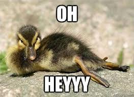 Heyyy Meme - oh heyyy duck hey quickmeme