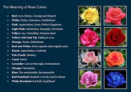 different color roses color symbolism chart gallery chart design ideas