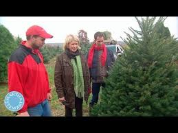 how to select the tree martha stewart