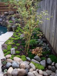 small aphonse karr bamboo in japanese style garden landscape