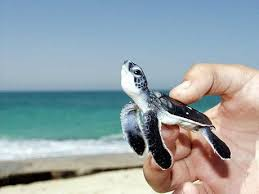 I Am Fabulous Meme - i am fabulous funny turtle picture turtle picture