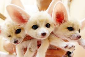 are these the world u0027s cutest creatures cnn travel