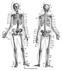 halloween skeleton template human skeleton template virtren com