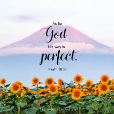 word quotes bible quotes bible verse sunflower