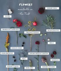 burgundy flowers seasonal flower guide fall