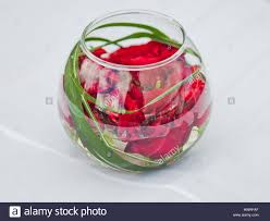 red roses in green water stock photos u0026 red roses in green water